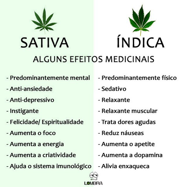 """a comparison between cannabis sativa and cannabis indica Cannabis sativa and cannabis indica versus """"sativa"""" and  no comparison was made between """"sativa"""" and  to classify cannabis sativa and."""